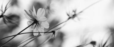 Black&white blomma royaltyfri fotografi