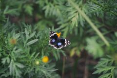 Black White and Blue Butterfly on Yellow Flower Stock Images