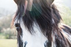 Black and White Blue Eyes Horse on a Sunny Summer Day with Chromatic Aberration royalty free stock photography