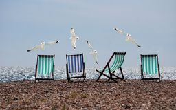 Black White and Blue Lounge Chair on and White Bird Stock Images