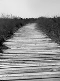 Black and White Boardwalk Along Lake Michigan. Boardwalk along Lake Michigan photo in black and white, beautiful scenery and vegetation Royalty Free Stock Images