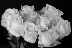 Black and white bouquet of white roses over black Royalty Free Stock Photography