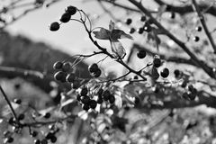 Black And White, Branch, Tree, Monochrome Photography Stock Images