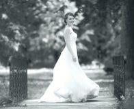 black and white  bride portrait Stock Images