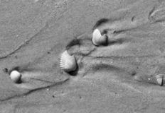 Black and white broken seashells on wet sand beach royalty free stock photos