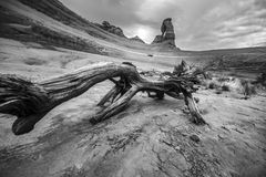 Black and white broken tree with view Delicate Arch. Fallen tree leading towards Delicate Arch Black and White Stock Image
