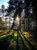 Black & White Broompark Trees Royalty Free Stock Photos