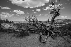 Black and White  of Bryce Canyon National Park, Utah. Royalty Free Stock Image