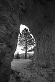 Black and White Bryce Canyon. Single Tree framed by a sandstone arch Bryce Canyon Stock Images