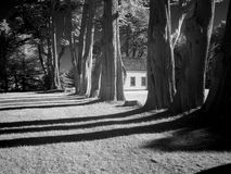 Black and white of building and trees. A line of trees and a building in black and white, long shadows Royalty Free Stock Photo