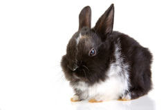 Black and white bunny Stock Photography