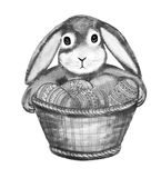 Black and white Bunny holding front paws basket. Black-and-white lop-eared Bunny holding the front legs with a decorative basket of decorated Easter eggs Royalty Free Stock Photo