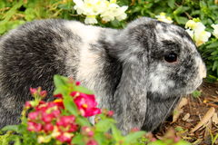 Black and white bunny rabbit Stock Images