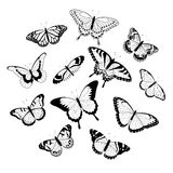Black and white butterflies Stock Image