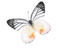 Black and white butterfly Stock Image