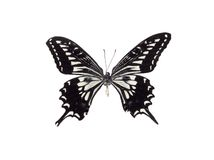 Black and White Butterfly Royalty Free Stock Images