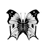 Black and white butterfly on white background Royalty Free Stock Photo
