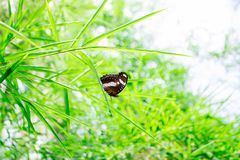 Butterfly Bamboo stock photo