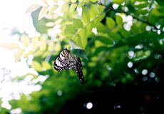 Black and White Butterfly on Brown Tree Branch Stock Image