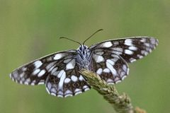 Black and white butterfly. Close up of black and white butterfly royalty free stock photo