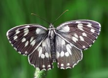 Black and white butterfly. Close up of black and white butterfly stock photo
