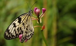 Black and white butterfly. Detail picture of black white butterfly Stock Photo