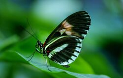 Black and White Butterfly on Green Leaf during Daytime Royalty Free Stock Photography