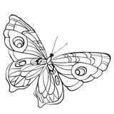 Black and white butterfly with open wings in a top view Royalty Free Stock Photo