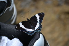 Black and White - the Butterfly and the Shoe Royalty Free Stock Images