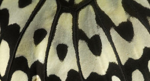 Black White Butterfly wing stock photos