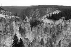 Black and White Canyon. This was part of  the larger canyon at Yellowstone National Park. I really loved the different colored rocks and trees against the Royalty Free Stock Images