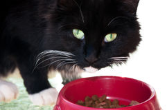 Black and White Cat. Eating from a red bowl Royalty Free Stock Photography