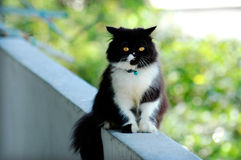 Black and white cat. Cat posing royalty free stock photos