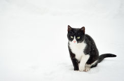 Black and white cat Royalty Free Stock Photo