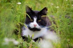 Black white cat. In grass Stock Photos
