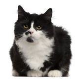 Black and white cat, 5 months old Stock Photo