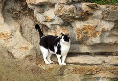 Black and white cat abandoned in a Parisian public garden Stock Images