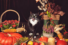 Black and white cat with autumn vegetables Royalty Free Stock Photography