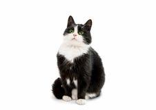 Black and white cat Stock Photos