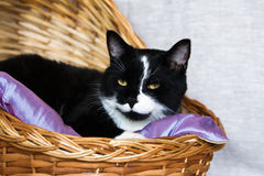 Black and white cat in a basket Stock Photos