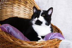 Black and white cat in a basket Stock Images