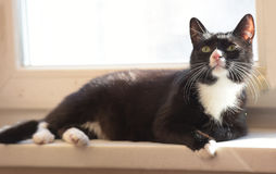 Black and white cat basking in the sun Stock Photo