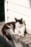 Cat basking in the sunshine Royalty Free Stock Images