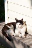 Cat basking in the sunshine. Black-white cat basking in the sunshine Royalty Free Stock Images