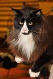 Black white cat stock images
