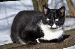 Black and white cat on the bench Royalty Free Stock Photo