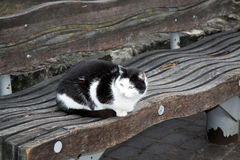 Black and white cat on the bench in Riga Stock Photo