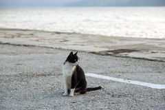 Black and white cat. Sitting at the bank royalty free stock photo