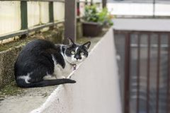 Black and white cat. On the wall stock photo