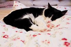 The cat lies Stock Photography